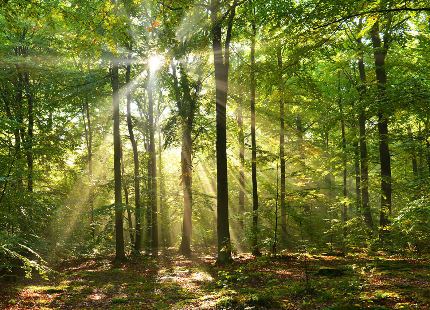 «Forêt Propre» MERCI!